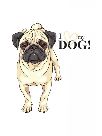 Produktové foto mops pes