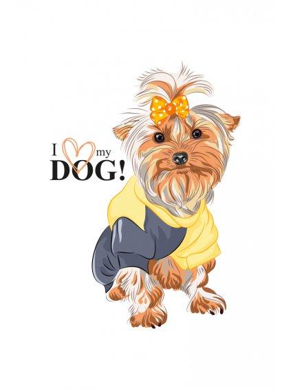 Produktové foto York pes