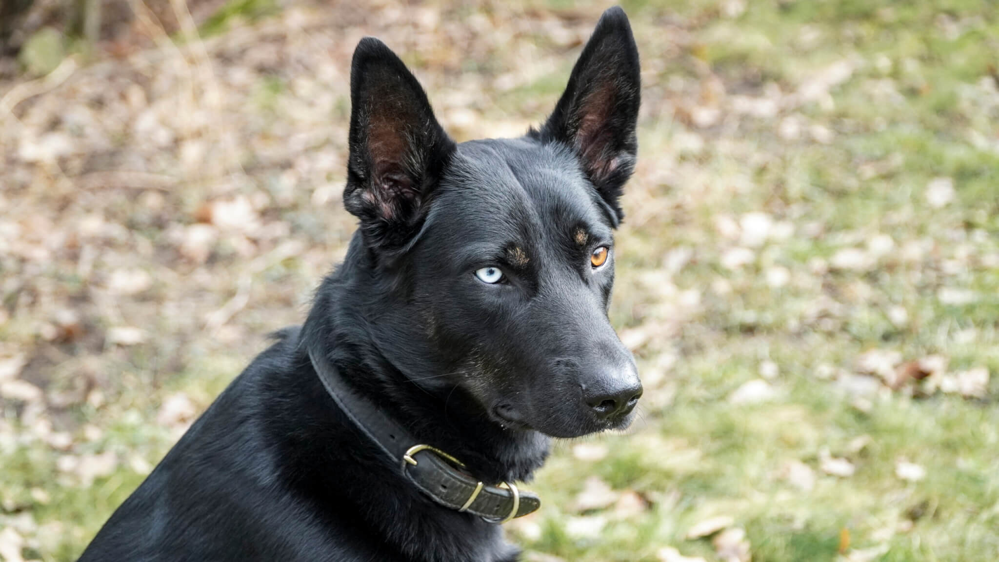Efektivní rady pro úspěšný základní výcvik vašeho pejska podle MyDr.Dog