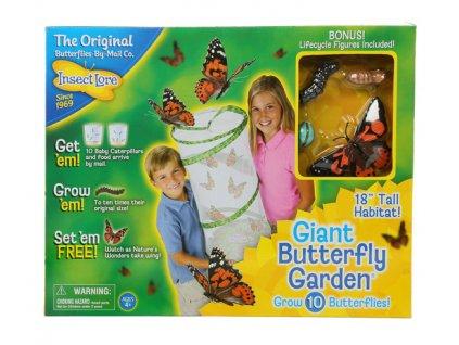 Velká motýlí zahrádka (6-10 housenek) - Butterfly Garden