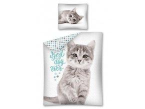 DETEXPOL Povlečení Sweet Animals Kotě šedé  Bavlna, 140/200, 70/80 cm - skladem