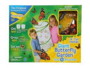 Velká motýlí zahrádka (10 housenek) - Butterfly Garden