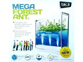 Mega Forest Ant LED 1