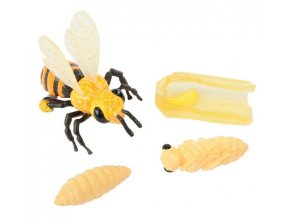 Zivotni cyklus včela 1