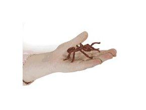 Zivotni cyklus mravenec 1