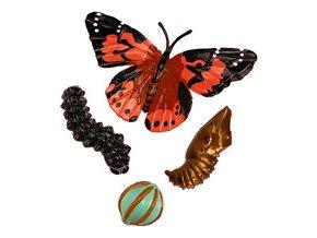 Zivotni cyklus motýl 1