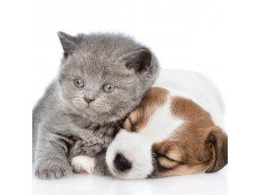 Povlak na polštářek Puppy and Kitten micro 40/40