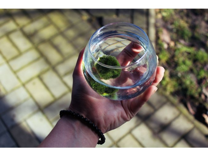 Malá kulatá sklenka na řasokoule - 400ml