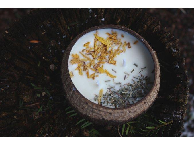 Meduňka s citronelou v kokosové misce