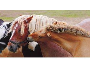 Moderní obraz koně