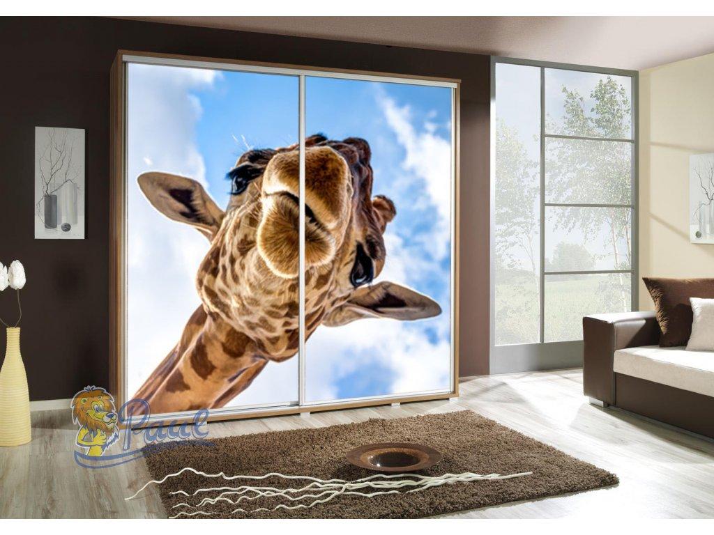 Žirafa 1