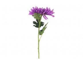 Chryzantéma , barva fialová. Květina umělá.
