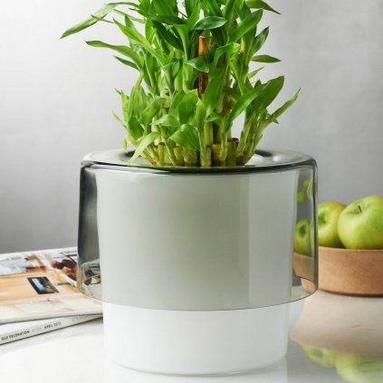 Roots Orchid Pot with Opal White Bottom 4