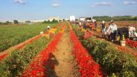 italská farma san marzano 1