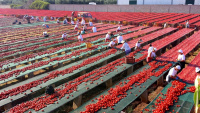 italská farma san marzano 2