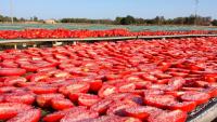 italská farma san marzano 5