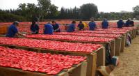 italská farma san marzano 4
