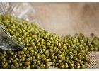 Mungo fazole BIO (semínka na klíčení)