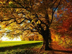 tree 779827 640