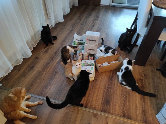 Handicapcats