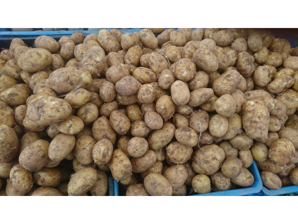 Sadbové brambory 5 kg