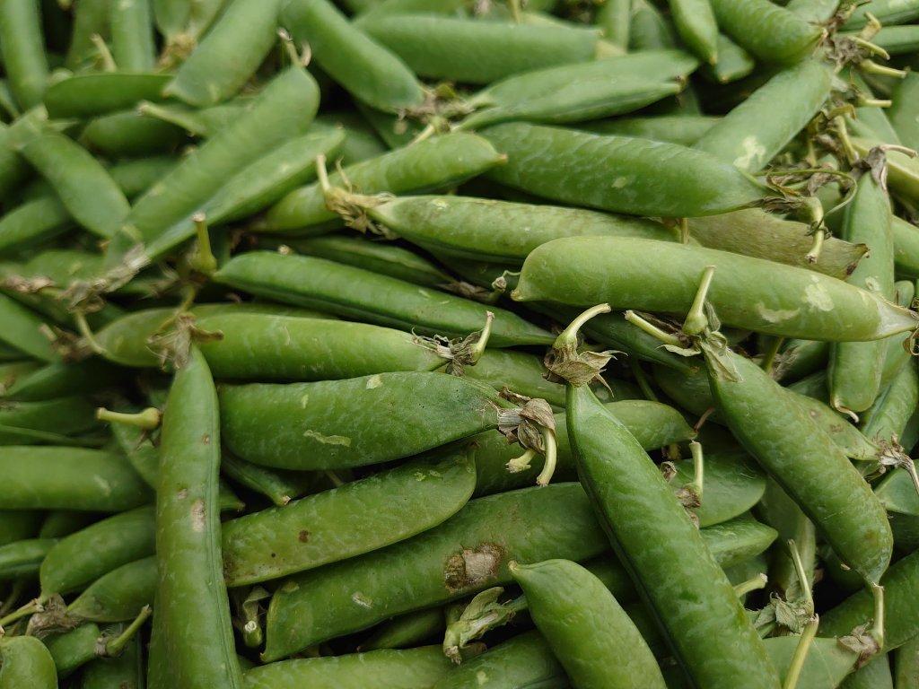 Hrášek zelený - lusky 0,5 kg