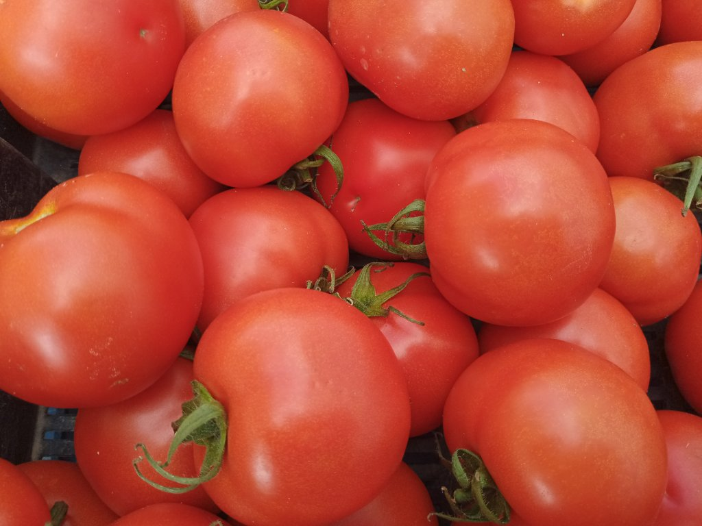 Rajčata, 1 kg