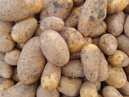 Nové brambory, 1 kg