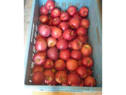 jablka Red PrinceJPG