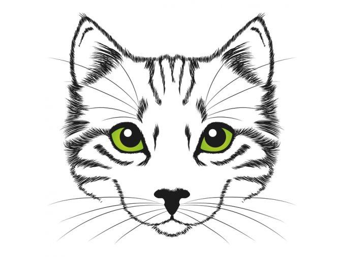 Kočka 5