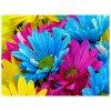 Barevné květiny 60x50cm