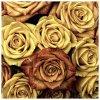 Růže 50x50cm