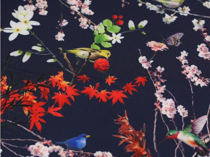 Softshell japanese birds