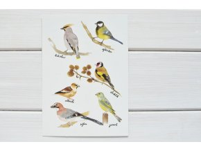 pohlednice ptacci1