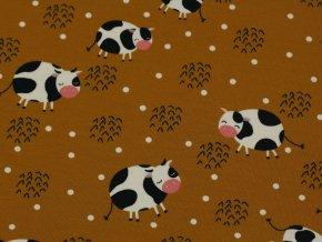 Bavlněný úplet - kravičky