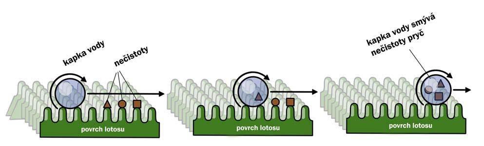 nanotechnologie-samočistící efekt