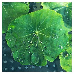 lotosový kvet bol predlohou pre priemysel, ktorý okopíroval jeho samočistiace vlastnosti