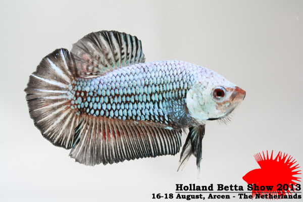 HBS2013-M3Allcolors-11