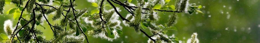 alergie-na-pyl