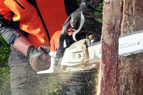 Příprava dřeva na zimní topení