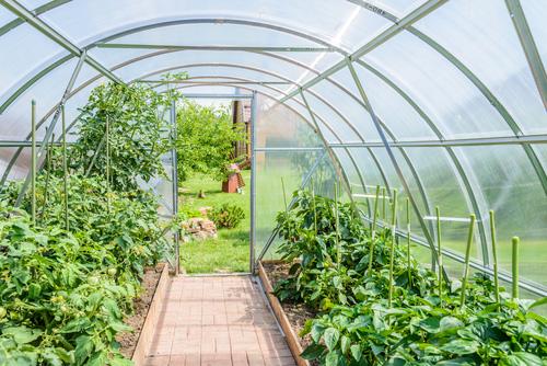 Pařeniště, skleníky a foliovníky