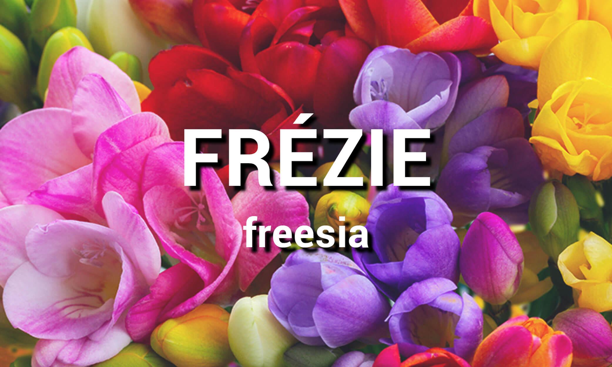 Frézie