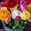Ranunculus mix 07