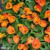 Kala Orania 01