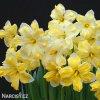Narcis Cassata 4