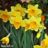 Narcis Fortune 2