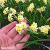 Narcis Minnow 5