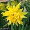 Narcis Rip van winkle 1