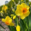Narcis Martinette 5