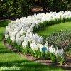 Hyacint Aiolos 4